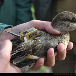 hunters_monitoring_biodiversity_9