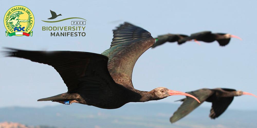 ibis_website