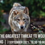 IG_Large_Carnivores_07_Sept_2021-copy